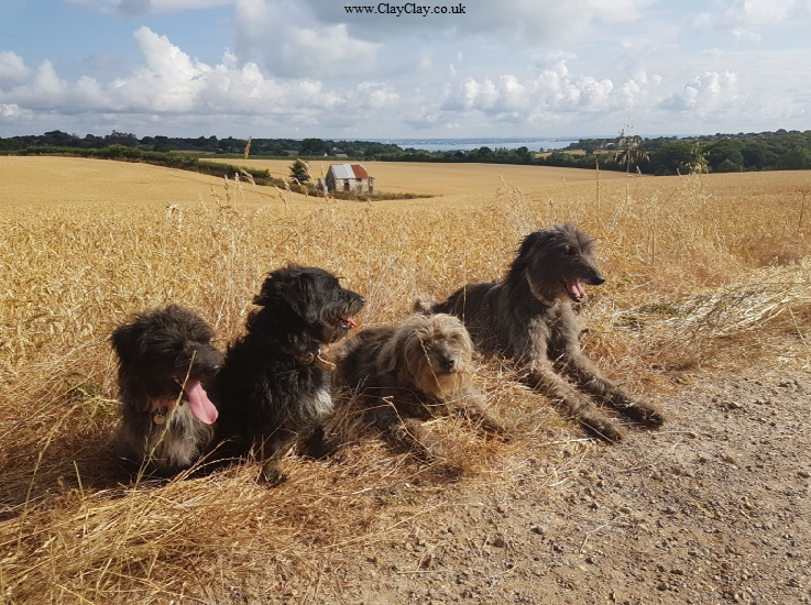 The Dogs. Photograph by Annabel Harrison